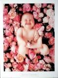 GEDDES, ANNE - 1993 - Plakat - Kunstdruck - Baby in Rosen - Poster